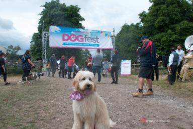 DogFest-1