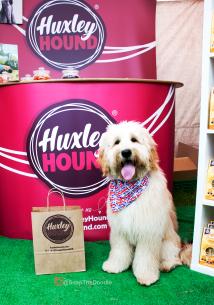 Huxley Hound