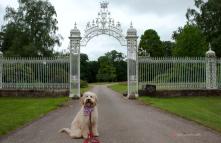 Posing in front of Cholmondeley Gates